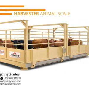 Weigh beams for livestock in Kampala Uganda