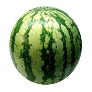 Small Size Fresh Water Melon